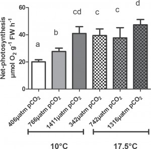 This figure shows the net-photosynthesis of treated algae under different levels of carbon dioxide and temperature. Letters above the bars represent significant differences from statistical analysis.