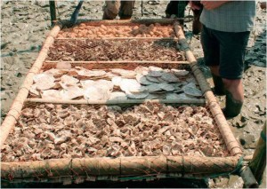 bamboo mattress structures with four test substrates: rubble/stone, windowpane shells, live oysters, and dead oyster shells.