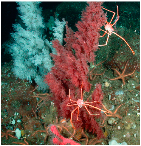 A unique, underwater niche for Christmas trees