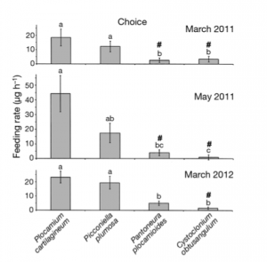 """Fig 5: Graph showing the results of the """"choice"""" feeding trial. Shows feeding rates of P. fissicauda on 4 species of algae."""