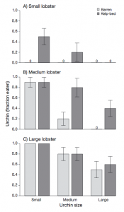 Fig 6: This figure shows the proportion of urchins fed on by lobsters, dark gray bars represent urchins from kelp forests and light gray bars represent urchins from barrens. The graphs are sorted by lobster size and urchin size.