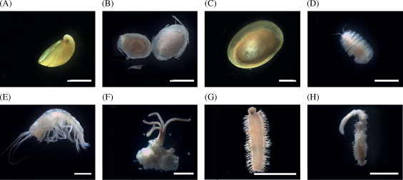 Worm food: Whale bones found in Antarctica are teeming with life