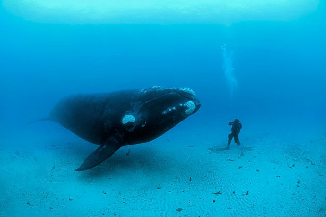 Fatter Whales Float Better