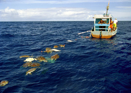 Hotspots of unwanted catches: the global issue of bycatch
