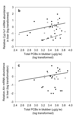Figure 1: Correlation between the expression of two biomarkers of toxic exposure (AhR and Cyp1a1) and concentration of PCBs in blubber. Increased concentrations were significantly correlated with increased expression of these biomarkers, though PCB content alone does not explain all variability.