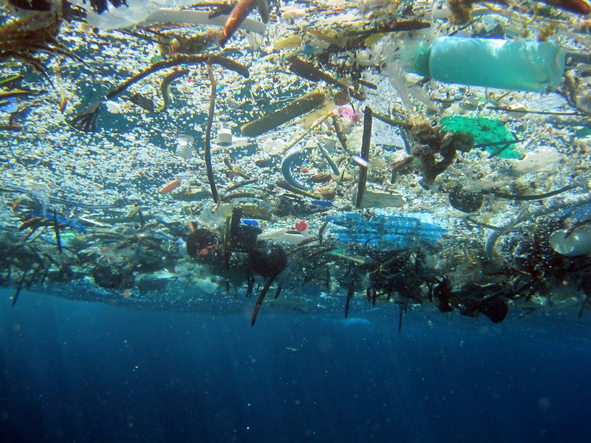 One species' trash is another species' refuge: Investigating the biodiversity associated with floating plastic debris.