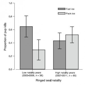 Figure 4: Comparison between the proportions of pup kills in fast ice and pack ice during years of high natality and low natality.