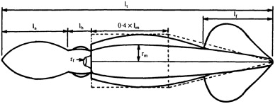 Figure 4: The parts and dimensions of the squid used to understand how squid fly.