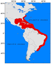 Fig 1: The spread of the invasive lionfish in the Atlantic. Red indicates invaded areas.