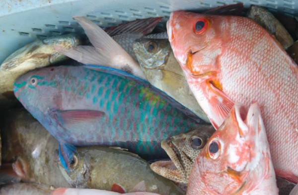 How will climate change affect coastal fisheries production?
