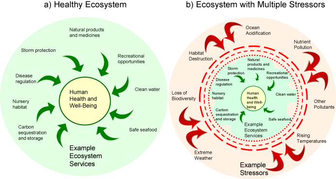water biodiversity and ecosystem