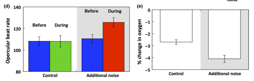 The first graph represents the opercular beat rate during the control (first column) and the noisy harbor (second column). It went up, indicating more stress, in the noisy harbor. The second graph represents the change in oxygen of the eel's tank. In the noisy harbor treatment (second column), the eel consumed more of the oxygen, causing the total oxygen in the tank to decrease at a faster rate.