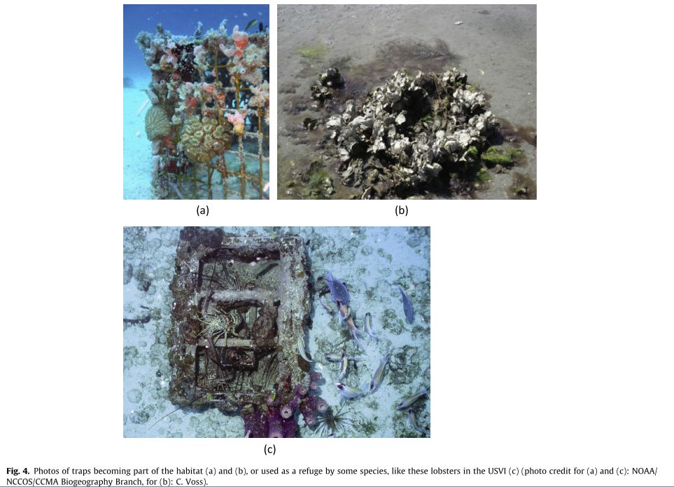 The Ghastly Impacts of Ghost Fishing Gear