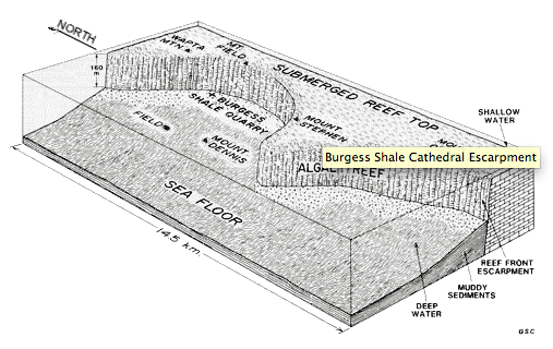 Figure 2. Although the Burgess Shale currently outcrops in the Canadian Rockies, the depositional environment during the Cambrian Period was a continental slope or sedimentary basin at the foot of a submerged ocean reef (The Burgess Shale Geoscience Foundation).
