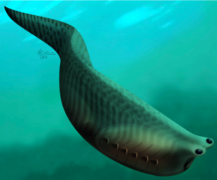 """A """"Jaw-dropping"""" Cambrian Fish!"""