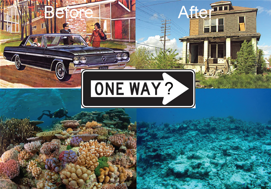 Chemical healing: how coral larvae and juvenile reef fish are using chemistry to choose a good neighborhood