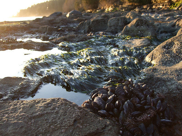 Moonrise Ecosystem: how intertidal seaweeds are influenced by celestial cycles