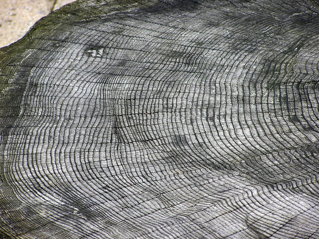Reconstructing Regional Climate and Oceanographic Processes From Tree Rings