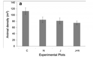 This plot shows the density of animals associated with seagrass beds. C = control, N = nutrient addition, J = jellyfish addition, J+N = jellyfish and nutrient addition.