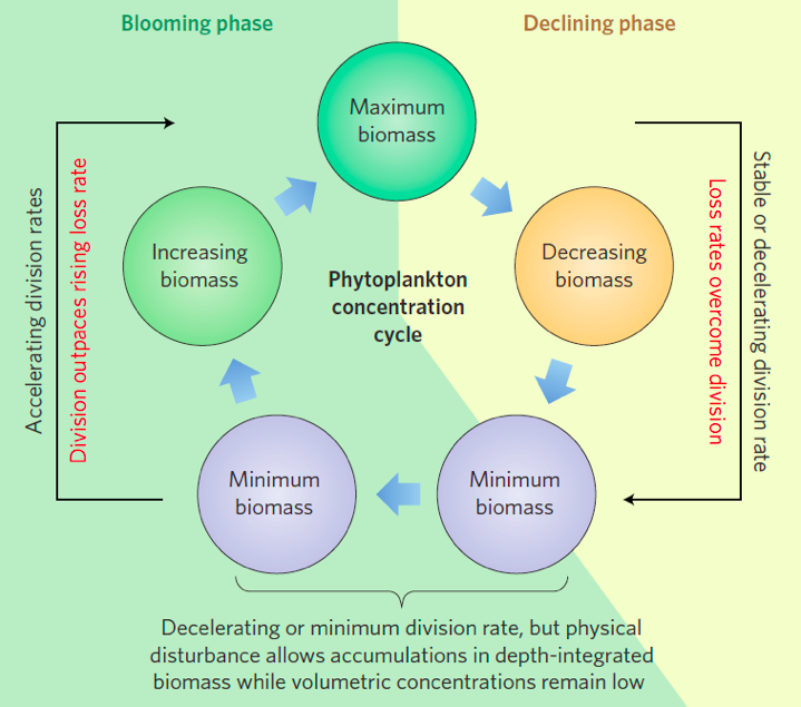 """Figure 3. Behrenfeld's framework of a phytoplankton biomass concentration cycle showing the """"disturbance-recovery hypothesis."""" The green background shows increasing phytoplankton concentration and the yellow background shows decreasing phytoplankton concentration."""