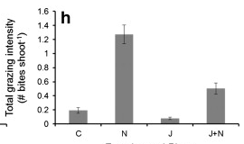 Fig 7: This plot shows grazing impacts by treatment. C = control, N = nutrient addition, J = jellyfish addition, J+N = jellyfish and nutrient addition.