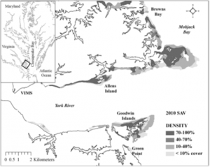 Figure 2: Regions in Chesapeake Bay where the eelgrass samples were collected in May 2010. Note that SAV stands from submerged aquatic vegetation, such as eelgrass. Image is modified from Orth et al., 2010.