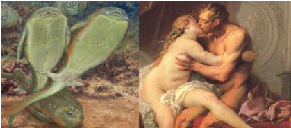 On the natural history of sex: which came first, internal or external fertilization?