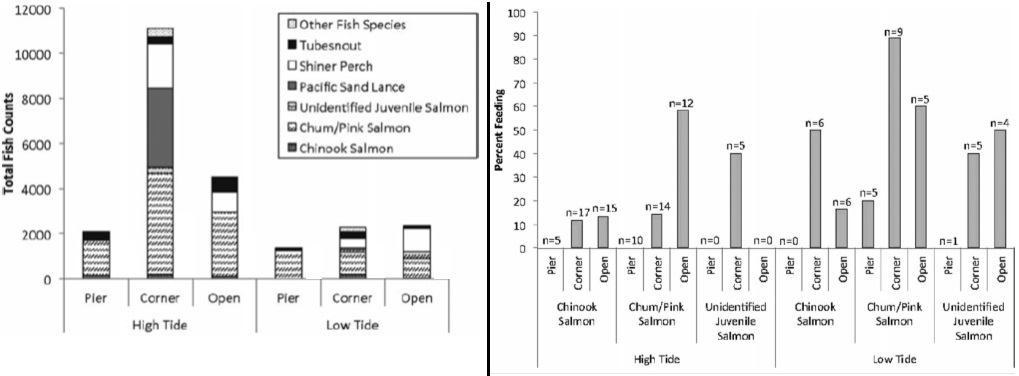"(Left) Figure 4 - The total number of fish counts for the fish species observed under the pier (""pier""), adjacent to the pier (""corner""), and in open water (""open"") at high and low tides. (Right) Figure 5 -  Percentage of juvenile salmon species observed feeding at seawall sites under the pier (""pier""), adjacent to the pier (""corner""), and in open water (""open"") at high and low tides."
