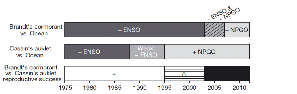 Figure 4. The middle and top bars show the relationship of each species with the dominant modes of ocean variability (ENO and NPGO). The bottom bar shows the correlation between the two seabirds.