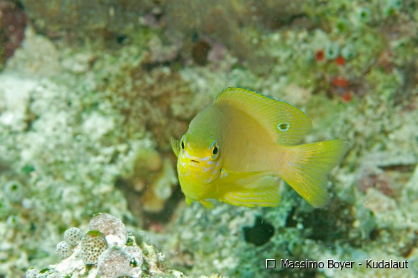 Don't let your guard down: a cautionary tale from reef fish in degraded habitat.