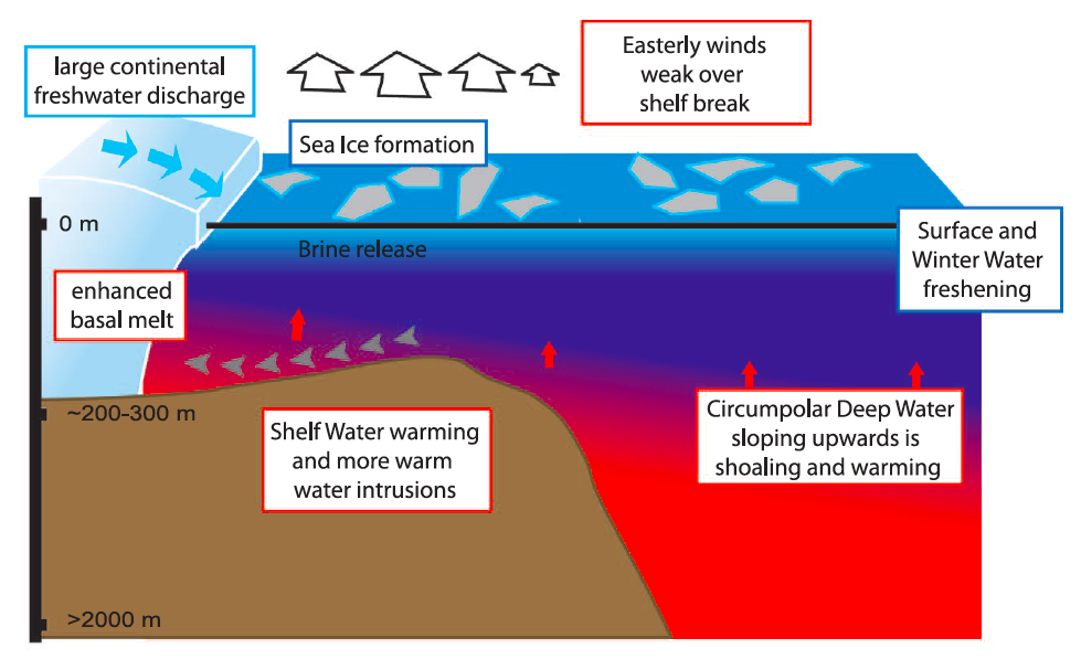 Figure 2.  Schematic of an upward sloping CDW flow regime showing weak easterly winds, warmer shelf water temperatures and increased melt from ice shelves.