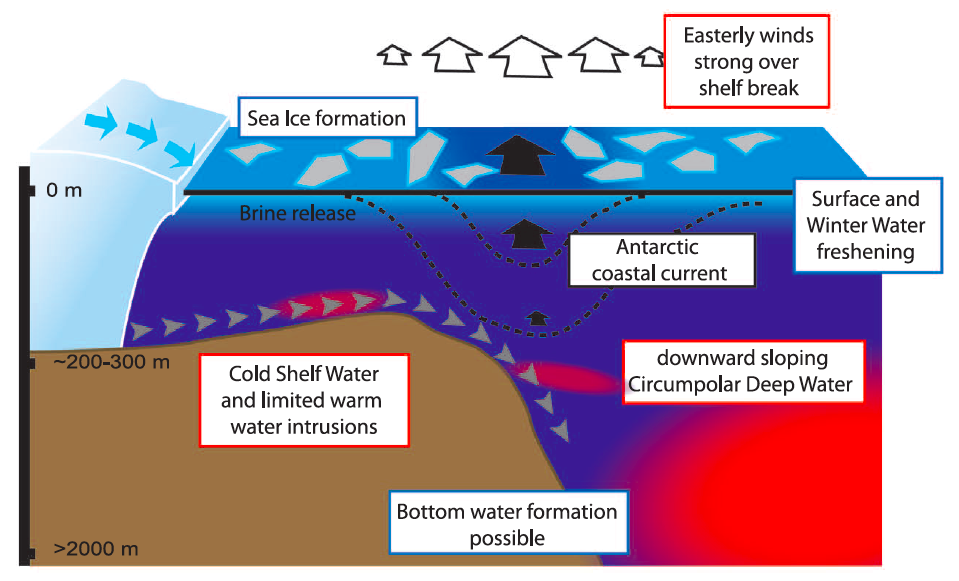 Figure 3. Schematic of a downward sloping CDW flow regime with strong easterly winds and cold shelf water.