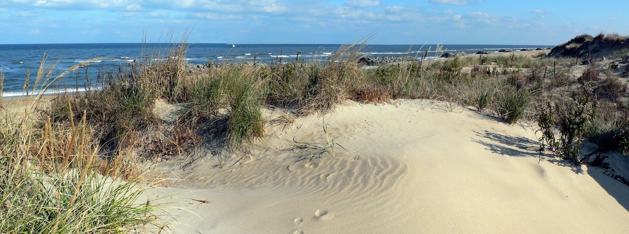 Barrier Island Stability Rooted in Their Plant Life