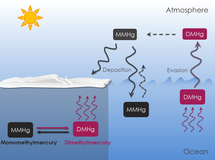 Methylated Mercury Cycling in the Canadian Arctic Marine Boundary Layer