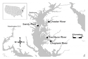 Figure 1: A map of all the Chesapeake Bay sample locations used in this study.  Map image from: Tracey Saxby, Kate Boicourt, Integration and Application Network, University of Maryland Center for Environmental Science