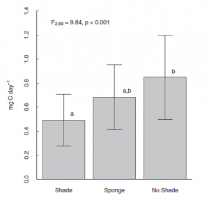 """Figure 3 - The growth of turtle grass is greater with no sponge present (""""No Shade"""") than with a dead sponge present (""""Shade""""). Turtlegrass growth is not significantly decreased by a live sponge (""""Sponge"""")"""