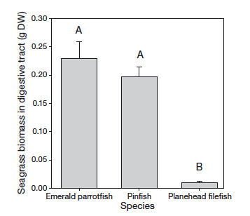"""Figure 1. Emerald parrotfish and Pinfish both have more seagrass in their digestive tracts than do filefish. The gray bars indicate the mean and the capped lines represent standard error. The """"A"""" indicates that these two species have similar amounts in their stomach while the single B indicates Filefish have a different amount on average."""