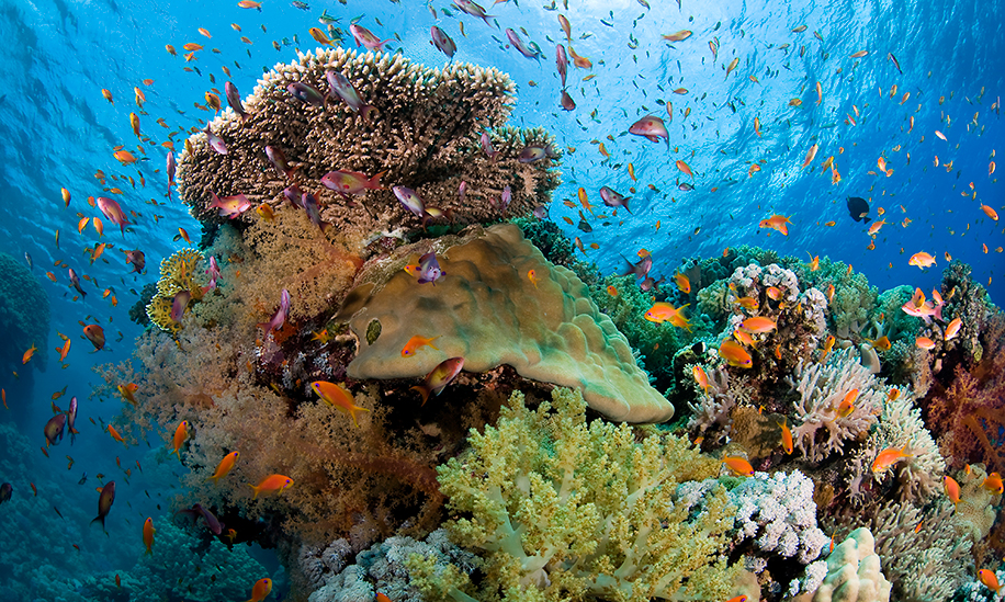 Macrobioerosion rates and what they mean for reefs