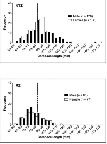 Figure 2 - Lobsters in NTZ larger than lobsters in RZ
