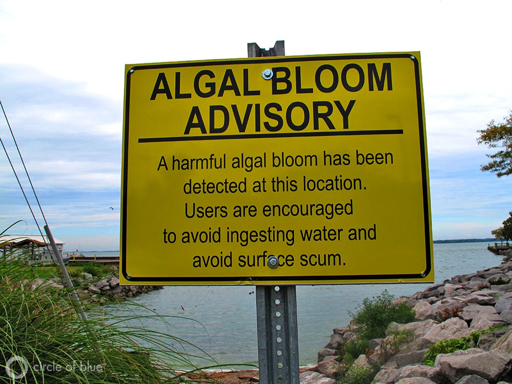 Sewage pollution running amuck in Florida's Indian River Lagoon