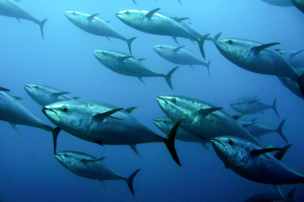 Protecting Well-Traveled Fishes: A New Approach