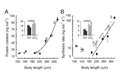 protein content and synthesis rate