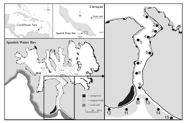 Fig. 2. The array of receiver networks in the channel (#1-8), mouth of the bay (#9) and on the reef (#10-15) that allowed tracking of tagged fish.