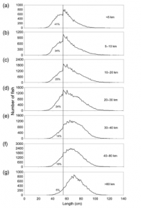 Lengthdistributionofcodcapturedinthelonglinefisheryin Icelandic waters during 2005 – 2013 according to distance from shore: (a) ,5, (b) 5–10, (c) 10–20, (d) 20–30, (e) 30–40, (f) 40–80, and (g) .80 km. Percentage of fish ,55 cm is indicated. All measurements were made by observers on-board vessels. Total number of length measurements was 301 741.