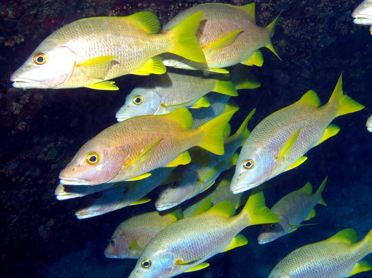 Leaving the nursery: fish migration between juvenile and adult habitats