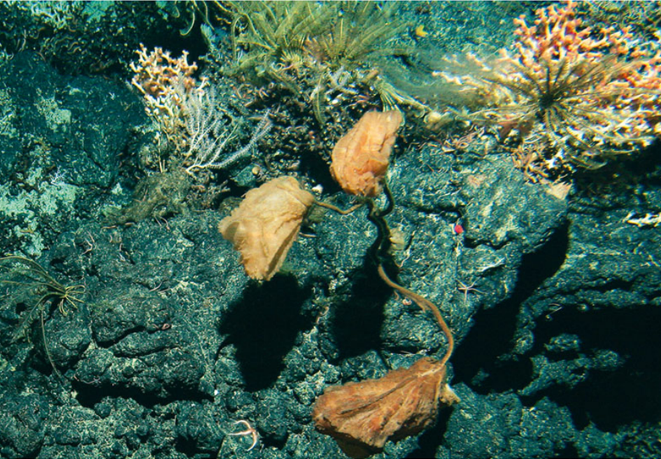 Staying ahead of commercial exploitation in the deep sea