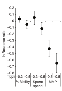 Figure 2 – sperm responded negatively to lower-pH conditions. The in response ratio measures how much the perm in the pH treatment varied form the control treatment, and values that are negative mean that the sperm were negatively affected by the simulated ocean acidification treatment.