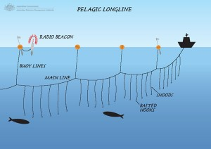 Figure 3. Longline fishing. Source: http://barnegatstaffordcommunitynews.blogspot.com/2010/09/discovery-channel-at-barnegat-light.html