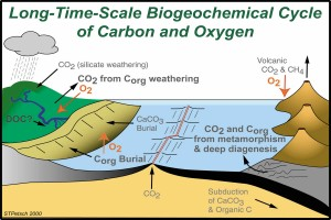 Figure 1: Part of the Carbon Cycle. Organic carbon is buried in coastal and marine sediments.