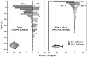 Figure 5: Comparison of the percentage of time spent at depth for the opah and the albacore tuna. The opah spends more time at depth and makes deeper dive than the tuna.